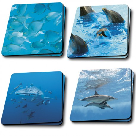 Sous verre collection Faune marine